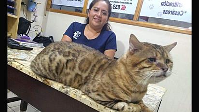 Gato foi confundido com leopardo em Tampico, México.