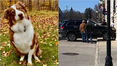 Cadela assume volante de carro e bate em parede de edifício em Sturgeon Bay, em Wisconsin (EUA).