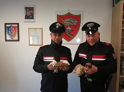 Dois policiais italianos resgatam filhotes de cachorro abandonados na rua.