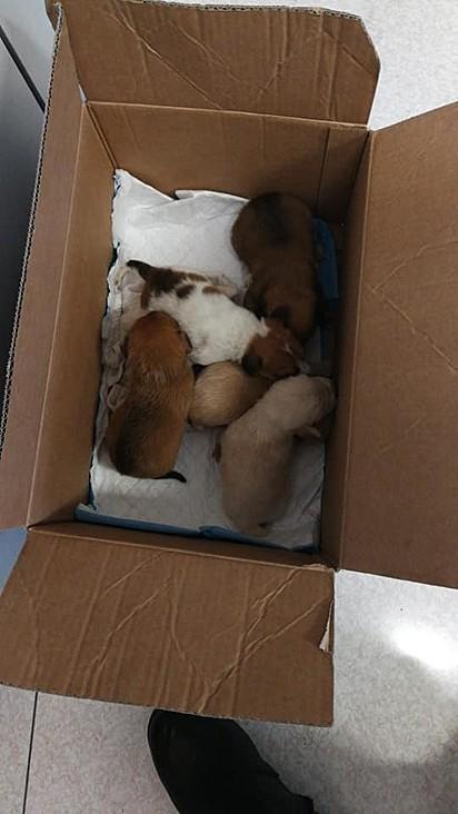 Os policiais encontraram cinco filhotes de cachorro.