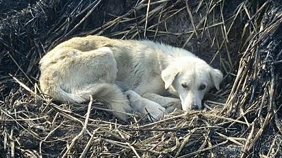 A doguinha vivia com outros oito cachorros até dar a luz.
