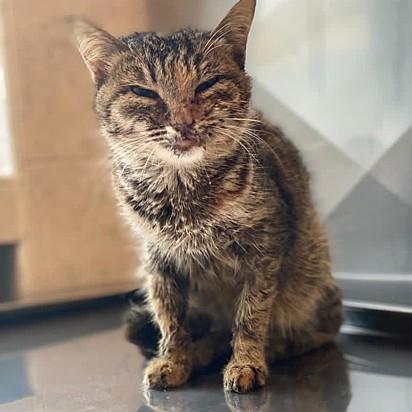 A gatinha seguiu se recuperando até estar totalmente pronta para ser amada em um lar para sempre.