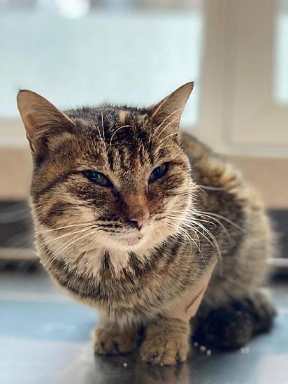 Lentamente, a gatinha foi ficando confortável com o pessoal que trabalhava no GWARP.