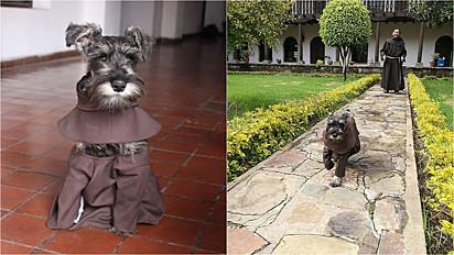 Cachorrinho é adotado por monges franciscanos em Cochabamba, na Bolívia.