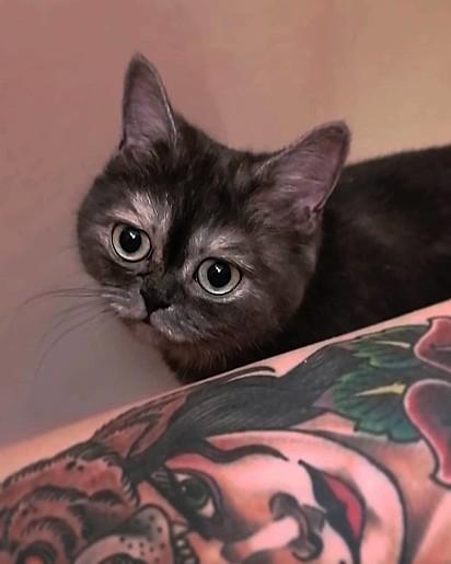 A gatinha Bean estava ferida quando foi encontrada nas ruas da Alemanha.