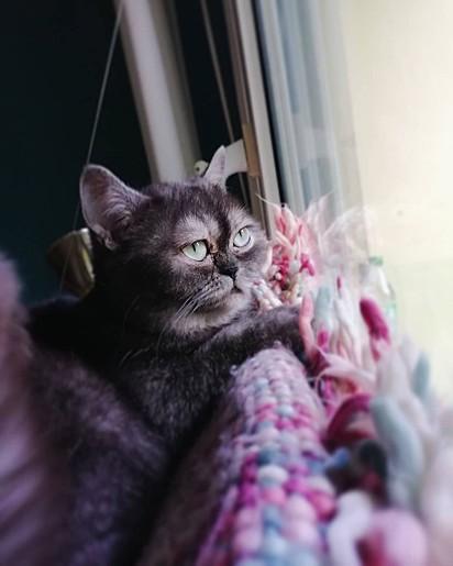 No aconchego do seu lar, Bean adora olhar pela janela.