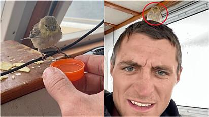 Pescador encontra pássaro se afogando no mar após não encontrar lugar para pousar.