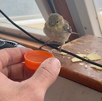 O passarinho foi encontrado se debatendo no mar.