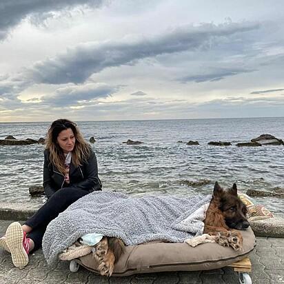 Heart foi levado à praia pela voluntária Gianna Serena Manfredi, que o cuidou até a sua morte.