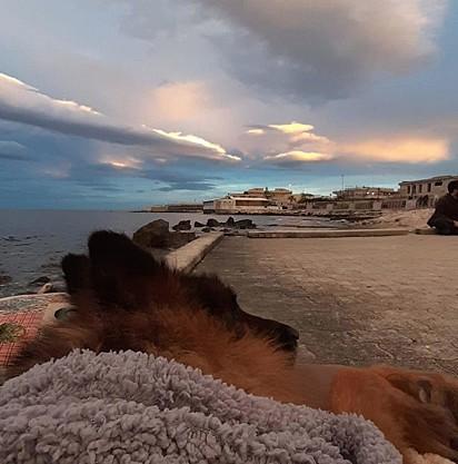 Heart desfrutando da brisa do mar um dia antes de morrer.