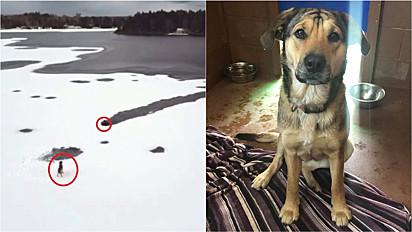 Cachorro ilhado em lago congelado é resgatado por mergulhador no Canadá.