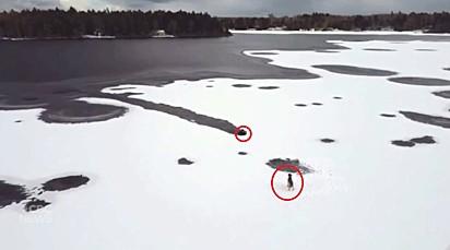 O cachorro ficou ilhado em um lago congelado.