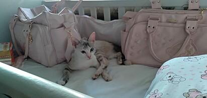 A gatinha Mia surpreendeu a dona ao levar um ratinho morto para o berço da sua filha.