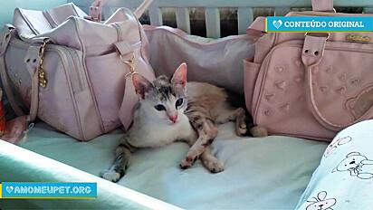 Gatinha presenteia bebê da dona deixando um rato morto no berço.