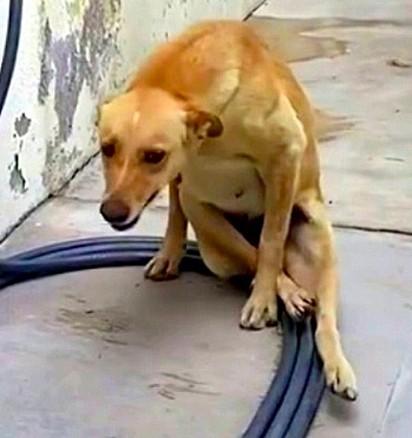 A cadela foi encontrada com uma grave lesão na coluna.