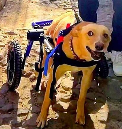 Dora consegue se locomover com o auxílio de uma cadeira de rodas.
