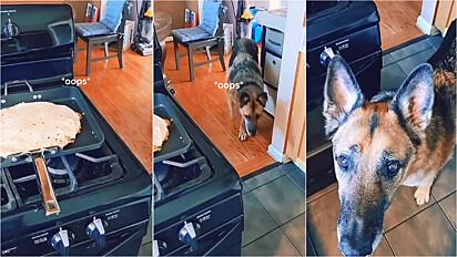 Ao ouvir a sua dona falar ooops, o pastor alemão rapidamente vai até cozinha para comer o que caiu no chão.