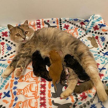 Mesmo sem acesso a cuidados básicos, os filhotes de Priscila estavam fortes e saudáveis.