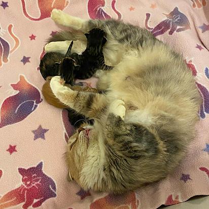 A gatinha se mostrou uma ótima mamãe para os seus filhotes.
