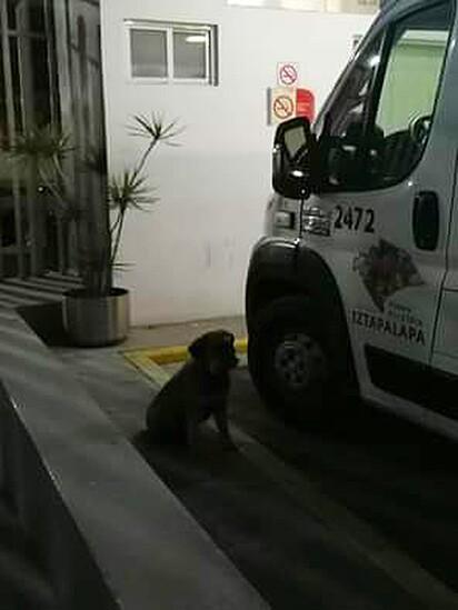 A família do tutor levou o cachorrinho para casa mais tarde.