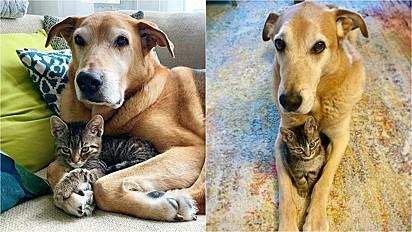 Mulher decide tornar a sua casa em Toronto, Canadá, em um lar temporário para filhotes de gato e o seu cão se torna protetor dos felinos.