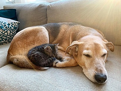 O cão Raylan com um dos felinos protegidos pela voluntária Laura Tindal.