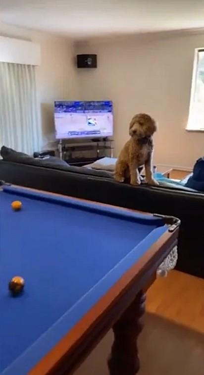 Arlo observa atentamente a partida.