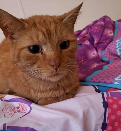O gatinho foi nomeado de Pumpkin Jr. pela família.