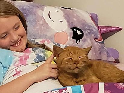 A garotinha e o seu gatinho de guarda compartilhada.