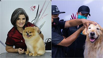 Natália Espinosa, groomer internacional, explica a importância de se profissionalizar para oferecer um serviço diferenciado nos pet shops.