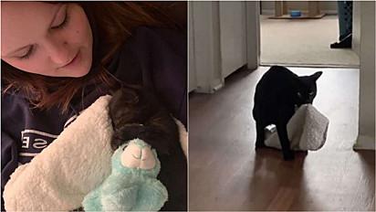 Mulher presenteia seu gato com cobertor e ele não se desgruda mais dele.