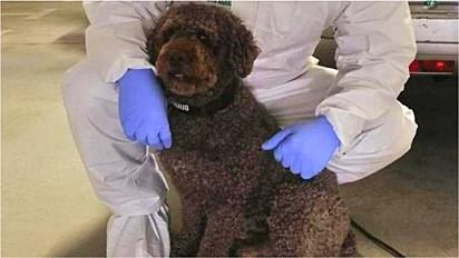 Com o auxilio de um cão, policiais localizam dinheiro roubado de idosos em Sevilha, Espanha.