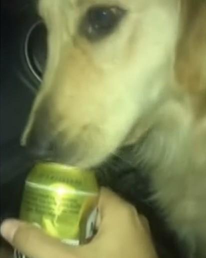 O jovem é suspeito de ter dado bebida alcoólica para o golden retriever.
