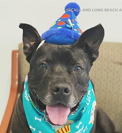 Melvin está perto de completar 4 anos.