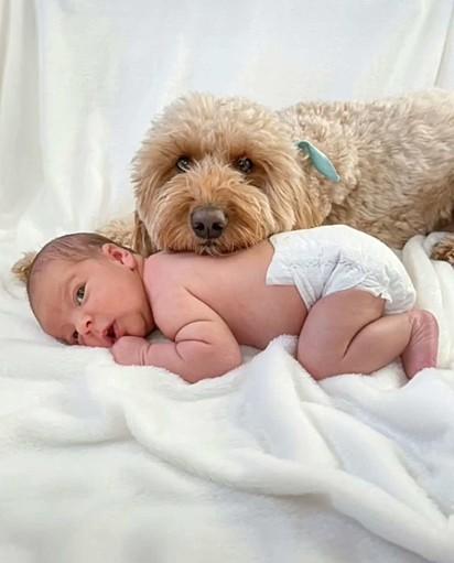 Sempre juntos, Bentley não sai do lado do bebê.