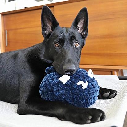 Apaixonada pelos seus brinquedos, Ava elegeu os mirtilos como a sua nova preferência.