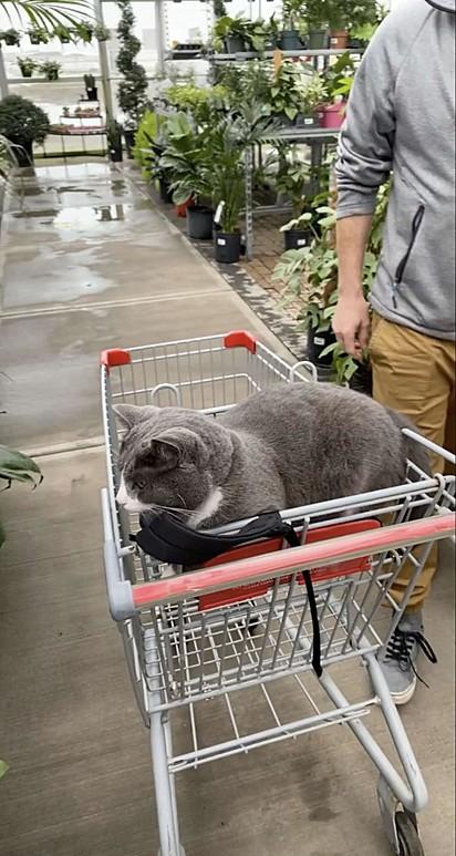 O gato pertence ao proprietário da loja e, ao que tudo indica, costuma agir sempre assim com os clientes.