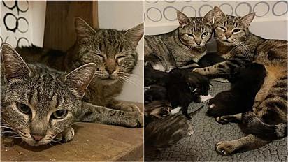 Dupla de gatinhas se unem para cuidar de ninhada.