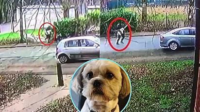 Ladrões roubaram shih-tzu na porta de banca de jornal no dia 11 de março em Manchester, Inglaterra.