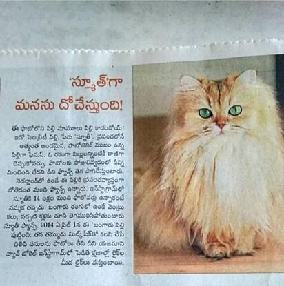 A gatinha virou matéria em jornal indiano.