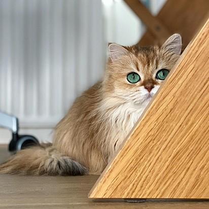 A gatinha à espreita.