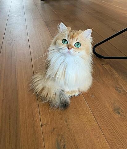 Parece uma princesa.