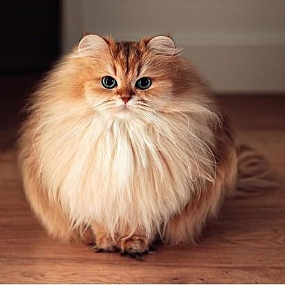 Muita fofura para uma gatinha!