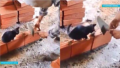 O gato acompanha o trabalho do pedreiro e o ajuda a assentar os tijolos.