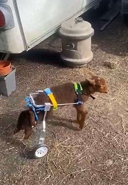 Graças à cadeira de rodas adaptada, ele agora anda de um lado para o outro.