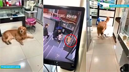 Cachorro não deixa gato ter conversa com família e o traz para dentro da loja.
