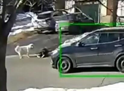Clover observou um veículo passando sem ver Haley.