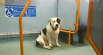 O cão Boston estava assustado no fundo de um ônibus quando foi encontrado pelo motorista Amos Paul Mak.