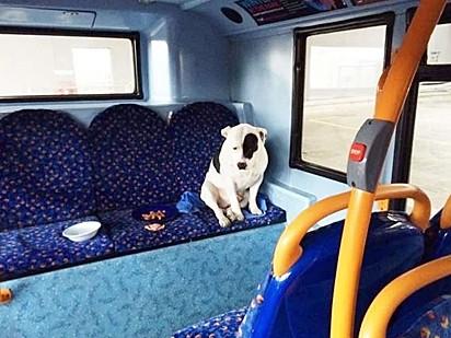 O cãozinho dormiu no ônibus e foi alimentado no dia seguinte pelo motorista.
