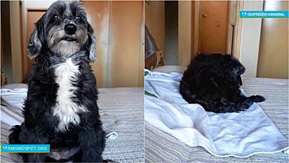 Cachorrinha se entristece porque dono se nega a levá-la junto ao trabalho de motoboy na cidade de São Paulo.